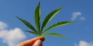 Kannabisz és jóga