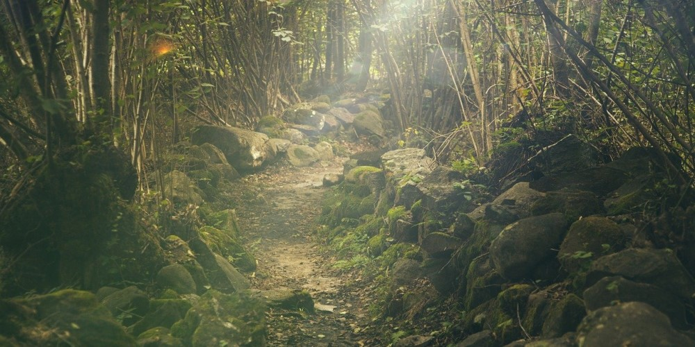 foldeles-elonyei, erdő