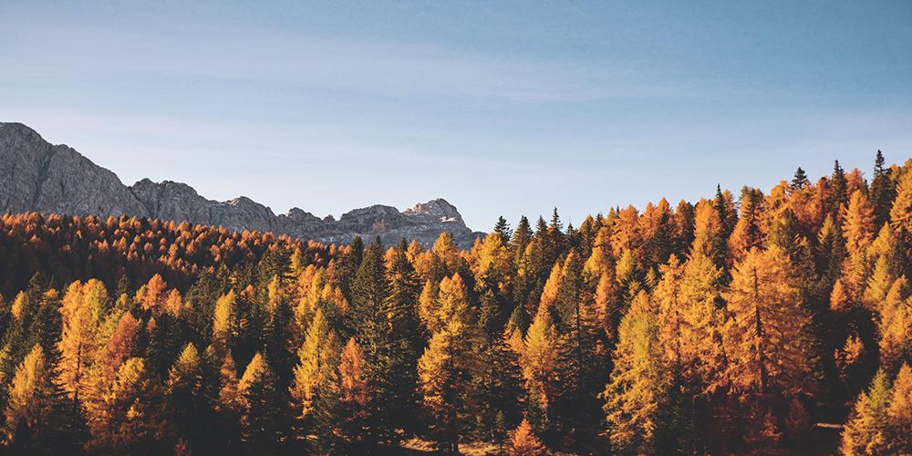 őszi kirándulóhelyek Budapesten